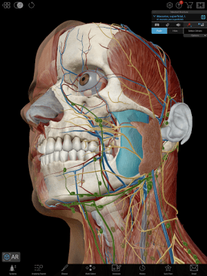 Human Anatomy Atlas 2020: Complete 3D Human Body 14