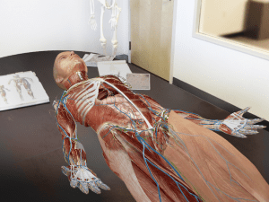 Human Anatomy Atlas 2020: Complete 3D Human Body 19